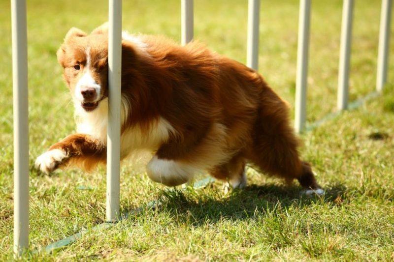 Agility Dog Educazione Cinofila - Terni