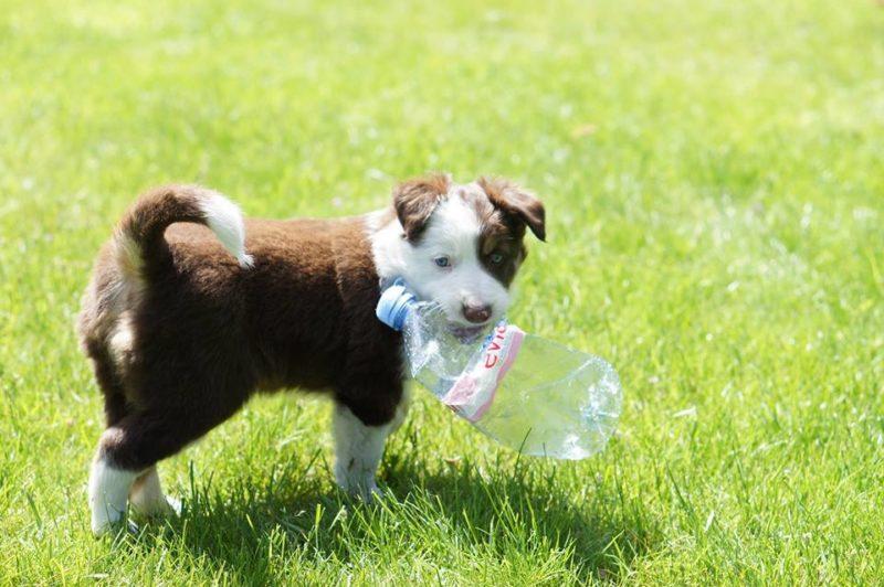 Puppy Class Terni